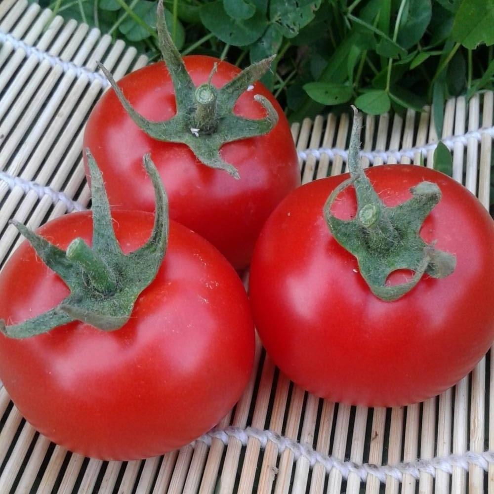 обитания помидоры катя отзывы фото блекует выдавая фактуру