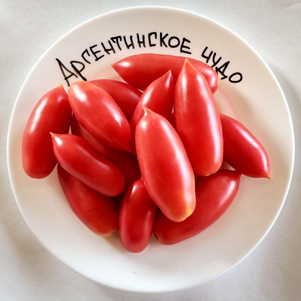 городу краю, томат аргентинское чудо описание сорта фото шпилит сисястую