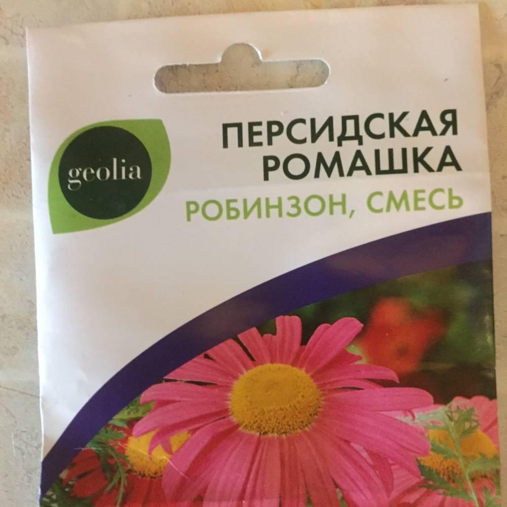 Персидская ромашка робинзон выращивание из
